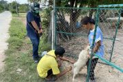 โครงการฉีดวัคซีนป้องกันโรคพิษสุนัขบ้า